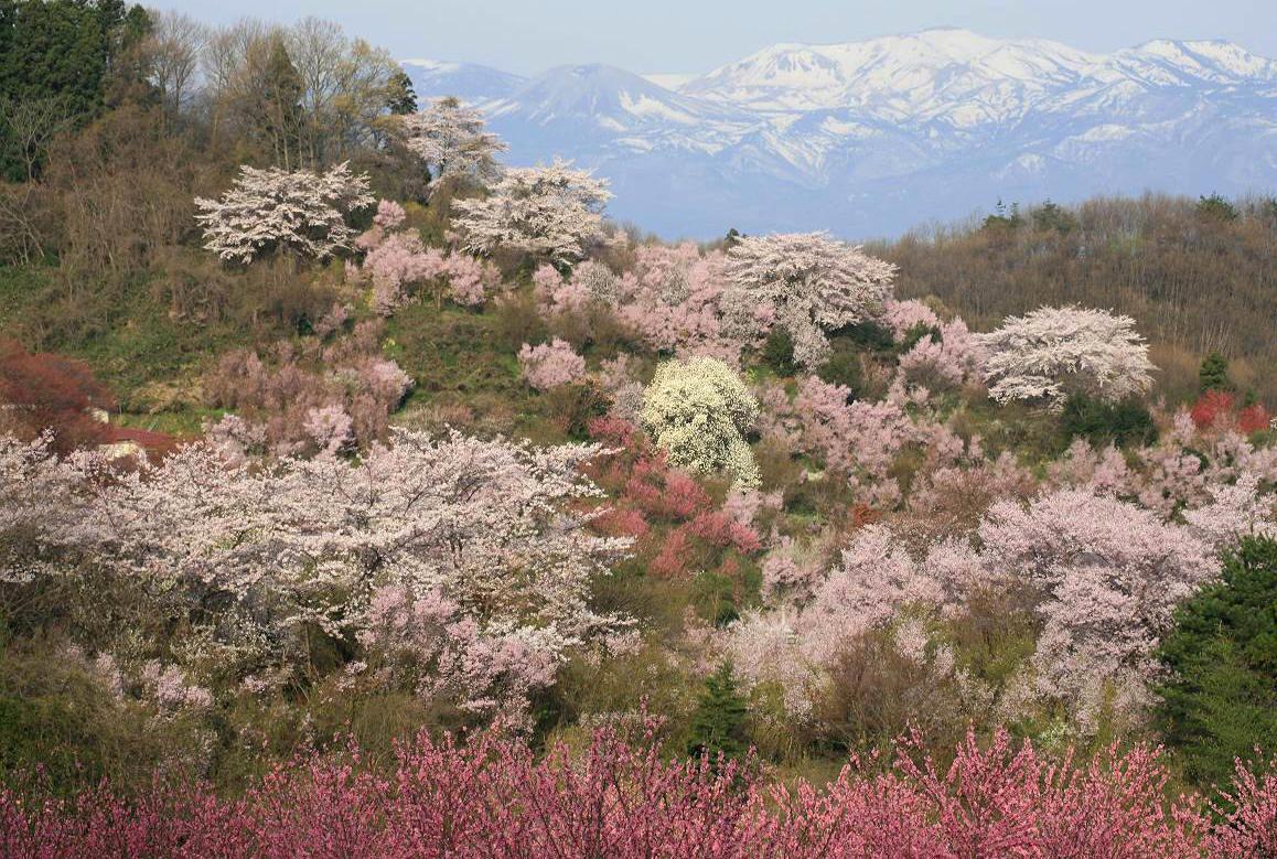 hanamiyama_park